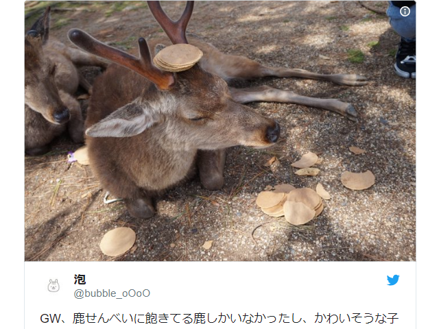 During Golden Week rush, Nara deer so overwhelmed with rice crackers they wear them as hats