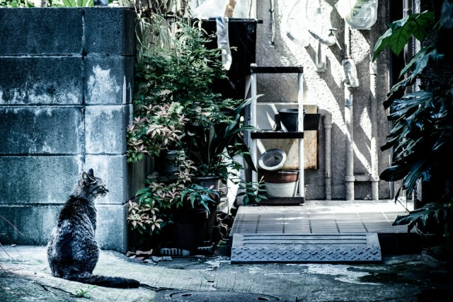 How to find a lost cat: Unique method from Japan proves to be surprisingly effective