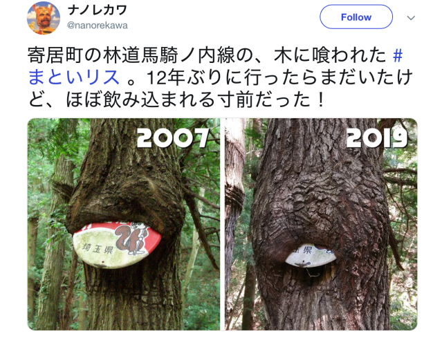 Tree swallows sign in Japan, proves nature is hungry by continuing to eat it for 12 years