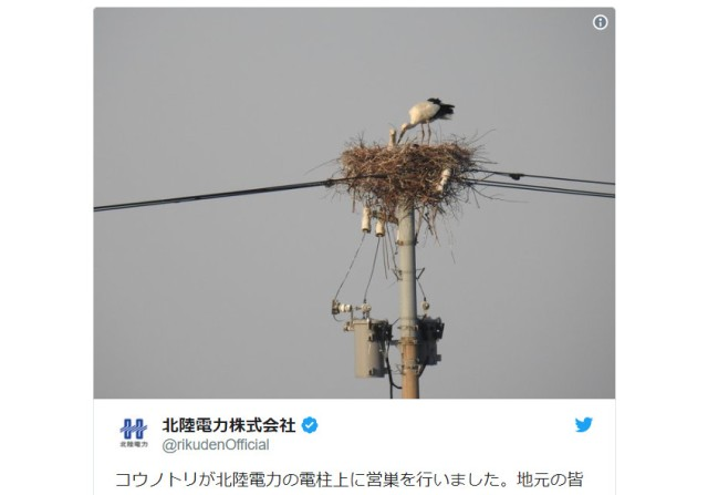 Japanese netizens are abuzz about the way a power company dealt with an unwanted bird's nest