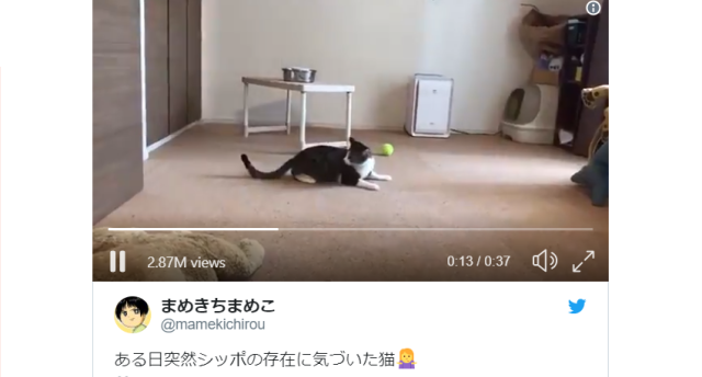 Japanese Twitter freaks out over cartoonist's cute cat freaking out over its tail 【Video】