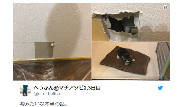 Japanese man hears scratching inside his walls, finds adorable surprise instead of zombies【Pics】