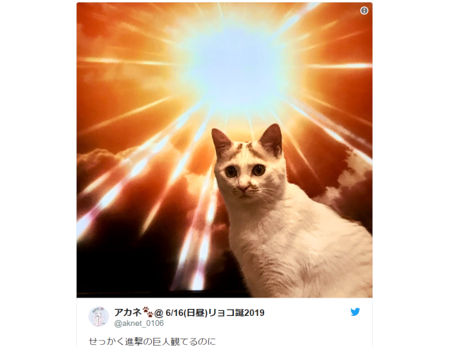 Japanese cat uses epic photobombing skills to ruin anime viewing experience, make Internet's day