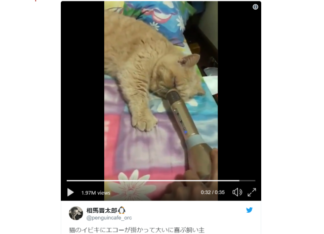 Sleepy Japanese kitty's snoring is cuter and crazier than you'd ever imagine【Video】