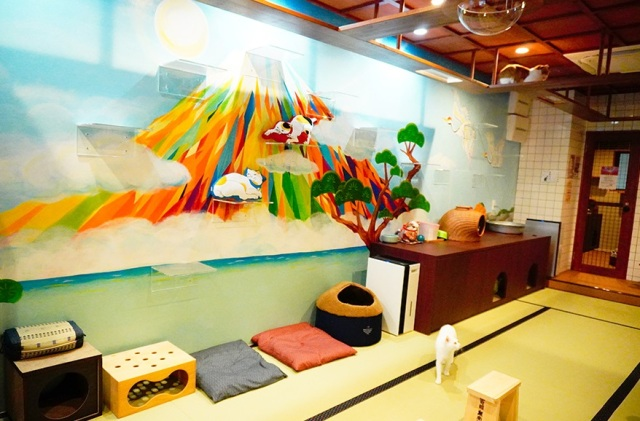 Cool cat cafe designed like a Japanese public bath lets you chill out with rescue cats