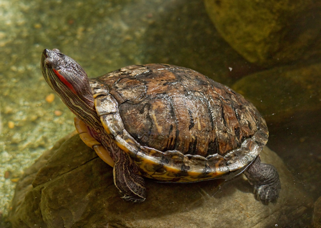 "Crushed turtle on tracks delays train in Japan, problem ""not uncommon"""