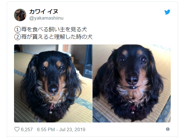 Dog's change in expression when offered a strawberry melts hearts 【Photos】