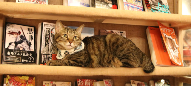 Combination cat cafe/manga cafe in Tokyo is an awesome place to spend 10 minutes or a whole day