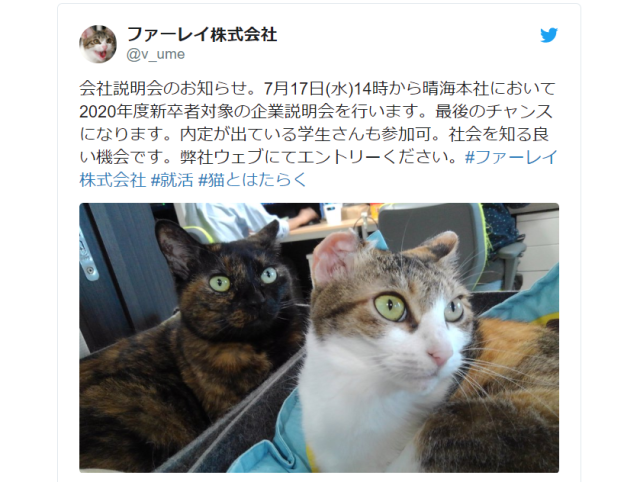 Tokyo IT company will give you a salary bonus every month to help you take care of your pet cat