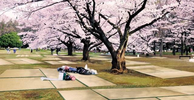 New sakura cherry blossom viewing sheets bring old-school beauty to hanami picnics