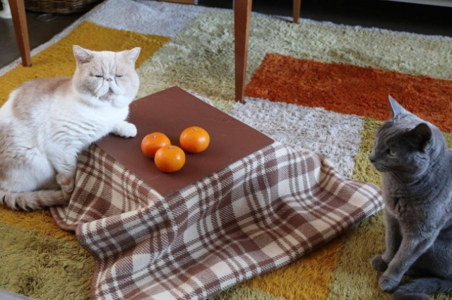 Cat kotatsu let your feline friends relax through winter the Japanese way【Photos】