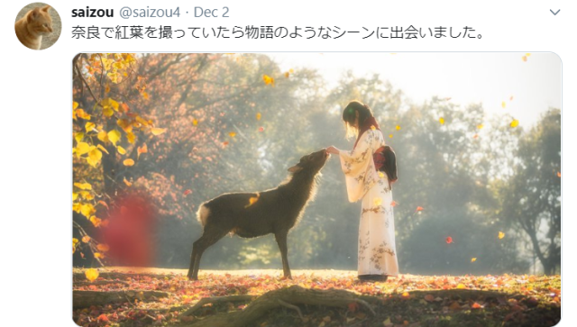 This captivating autumnal image looks like something out of a Japanese fairytale