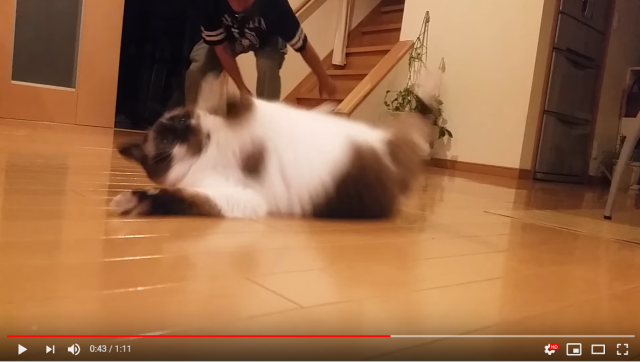 And now, a spot of everyone's favorite winter sport: Japanese cat curling【Video】