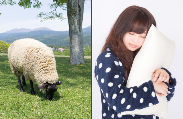 Counting sheep to get to sleep may work after all, unless you speak Japanese