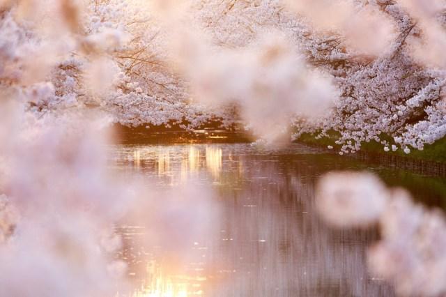 Starbucks Japan unveils first sakura drink for cherry blossom season 2020