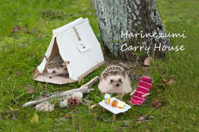 Hedgehog Carry House from Japan lets you take your little pets with you wherever you go