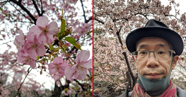 Cherry blossoms blooming in Tokyo right now! The super-early Mr. Sato sakura party【Photos】