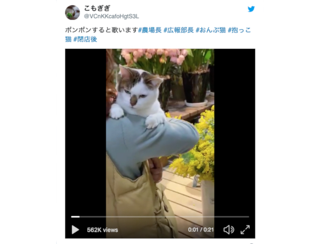 "Cute ""koala"" cat sings when she's cuddled【Video】"