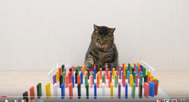 Japan's Cats and Dominos video warms the heart, makes us want to stay home and watch it all day【Video】
