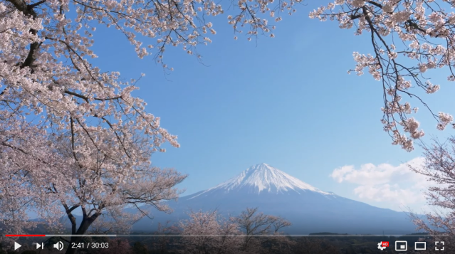 Domino's offers sakura videos, free second pizzas to get Japan to do cherry blossom parties at home