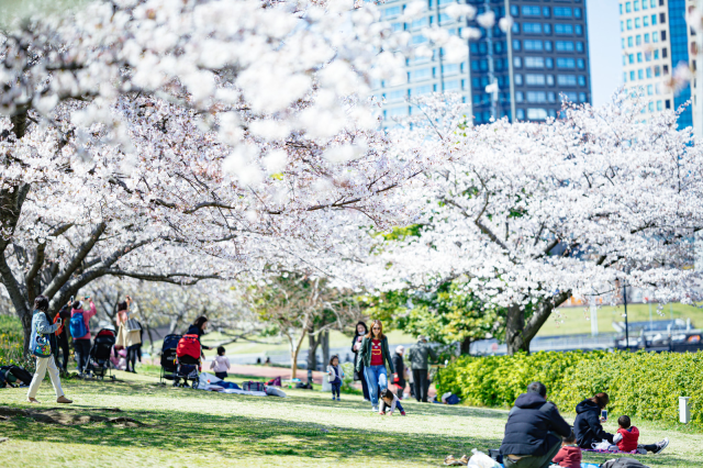 No Tokyo cherry blossom parties? Government asks citizens to refrain from outdoor hanami parties