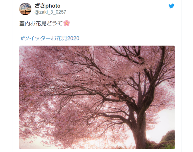 Stay-home sakura – Japanese Twitter shares breathtaking cherry blossom photos of past and present
