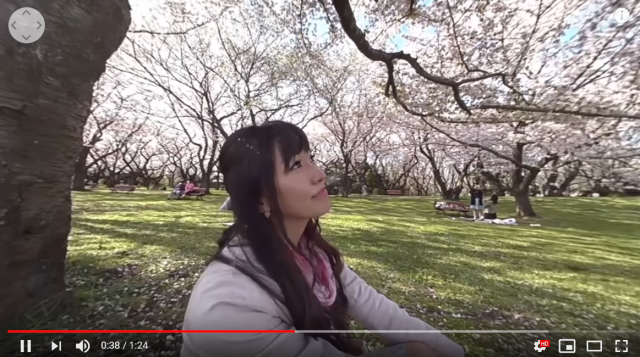 VR cherry blossom parties: 360-degree video series provides beauty, dates for those stuck indoors