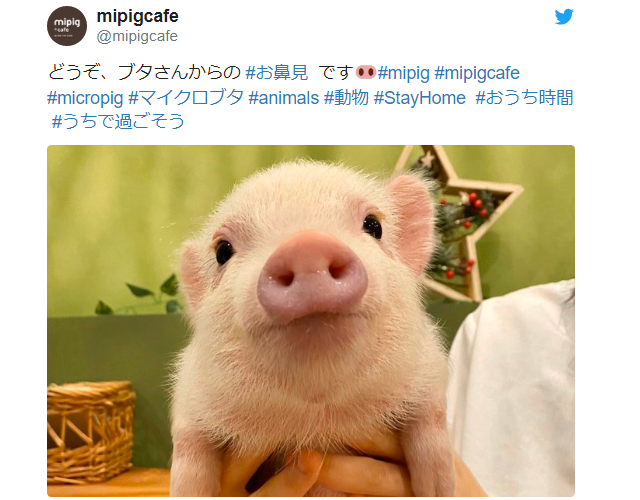 """Japanese Twitter holds """"nose-viewing parties"""" instead of """"flower-viewing parties"""" amid quarantine"""