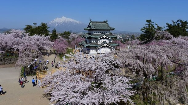 Coronavirus forces cancellation of 100-year-old cherry blossom festival in Northern Japan