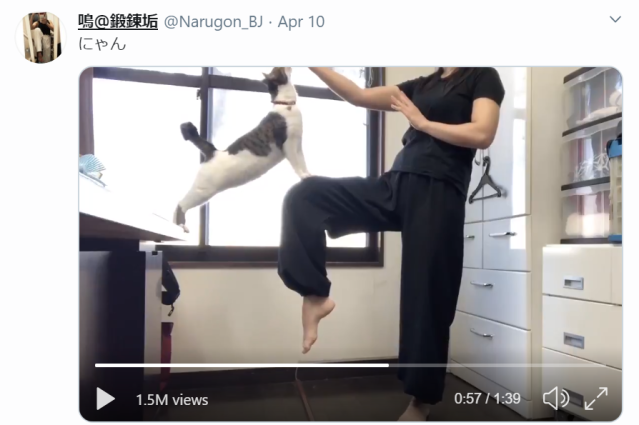 Kitty offers a helping paw in the middle of a martial arts demonstration【Video】