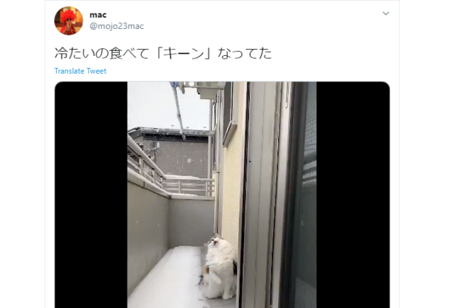 We can all relate to this adorable Japanese cat getting a touch of brain freeze【Video】