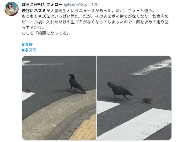 Shibuya rats appear on streets as people stay home during coronavirus outbreak【Pics, Video】