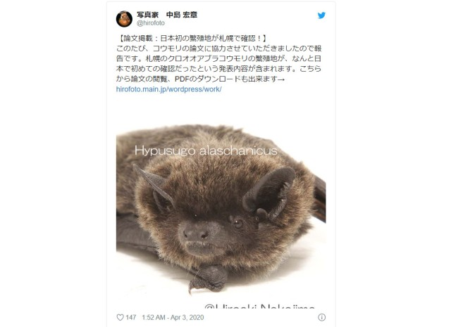 Large bat species discovered to be breeding in Japan for the first time