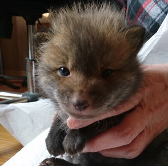 "Man finds adorable lost ""puppy"" on roadside in Japan, turns out to be adorable something else"