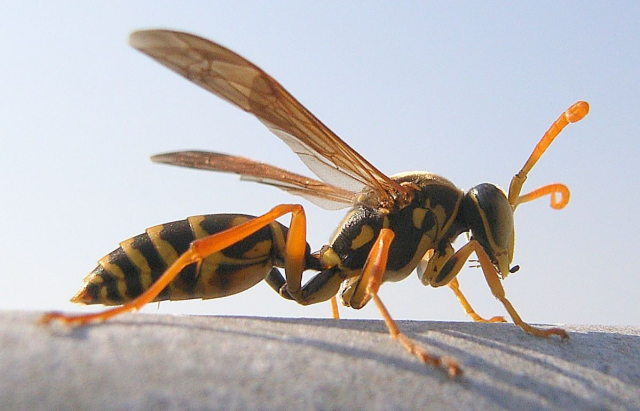 Japanese Twitter user shows how to keep wasps away from your home in seconds with no chemicals