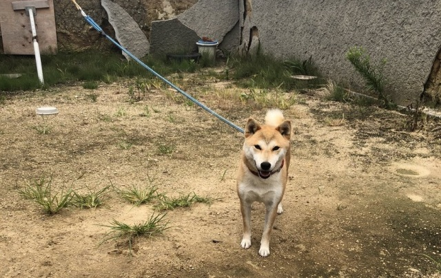 Real-life PlayStation 3 dog found in Japan【Photos】