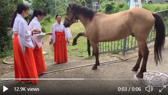 "Osaka shrine's sacred horse provides no bathroom privacy, lots of laughs after ""remodeling""【Vid】"