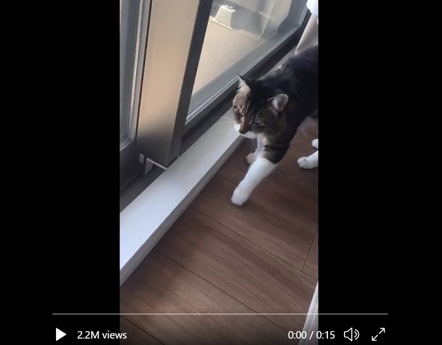 Very smart, funny cat shows exactly what it feels like to go outside in Japan's heat wave【Video】