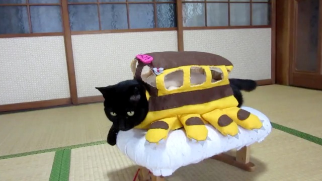 The Japanese cat with over 100 cosplay costumes