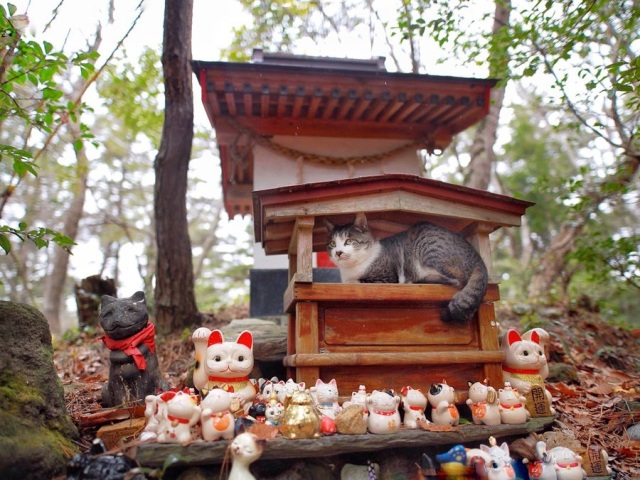 Cat in Japan finds the perfect shrine to take shelter from the rain at