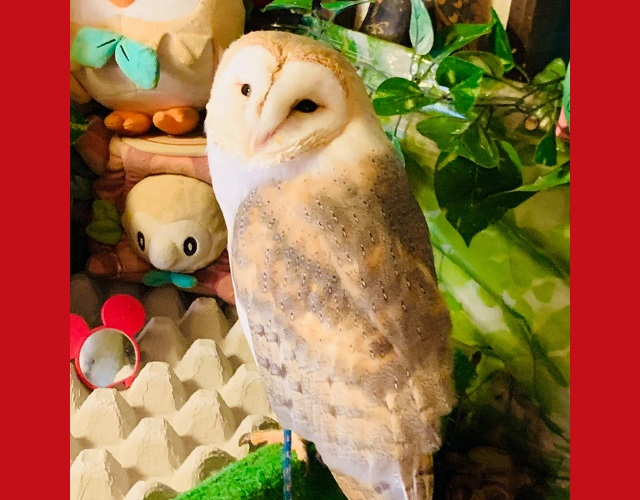 Like owl cafes? How about an owl Chinese restaurant in Yokohama?