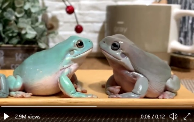Japan's most cold-blooded frog breaks romantic mood in a hilarious way【Video】