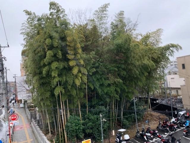 A visit to Japan's forbidden forest of Yawata no Yabushirazu