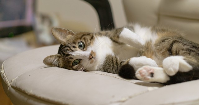 Tokyo cat shelter and coworking space lets you be productive with cats