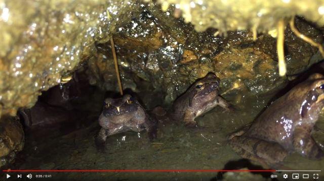 Frogs trick Fukuoka police into false puppy rescue