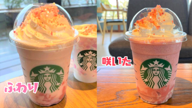 We compare and contrast Starbucks Japan's 2021 cherry blossom season Frappuccinos【Taste Test】