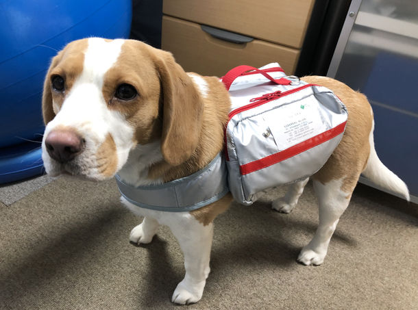 Japanese company makes emergency natural disaster survival bag for dogs