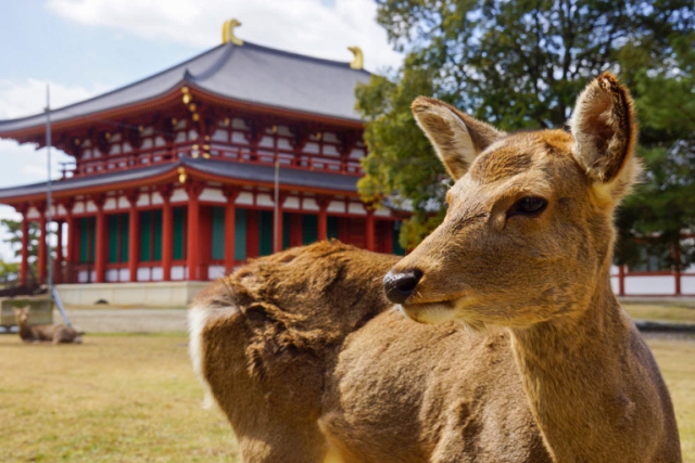 Deer killed by man with axe in Nara