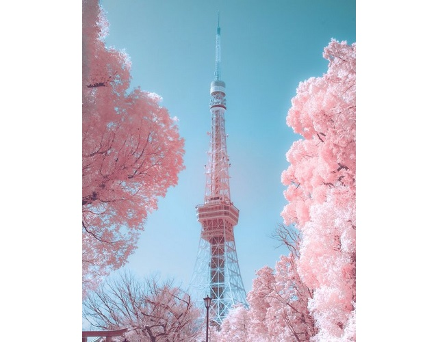 These amazing, ultra-pink photos of Tokyo are NOT of cherry blossom trees【Photos】