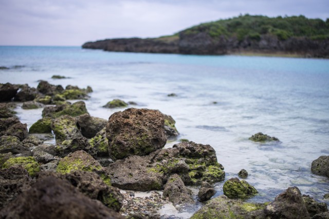 10 yakuza members arrested for stealing sea cucumbers from ocean